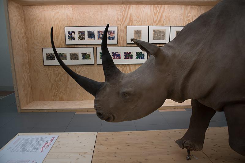 L'Université de Lausanne salue l'expo « Rhinocéros féroce »